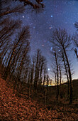 Winter constellations over Hyrcanian Forests, Iran