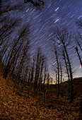 Star trails over Hyrcanian Forests, Iran