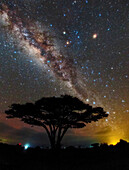 Milky Way over Acacia tree, Amboseli National Park, Kenya