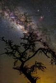 Milky Way and Acacia tree, Amboseli National Park, Kenya