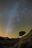 Night sky over tree, Iran