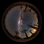 Night sky over baobab trees, 360-degree view