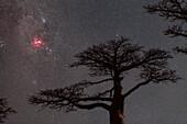 Carina Nebula and baobab trees, Madagascar