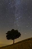 Night sky over a tree