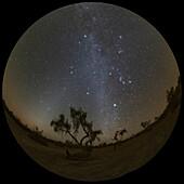 Winter constellation over desert