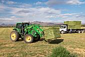 Alfalfa harvest in New Mexico, USA
