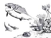 Devonian fauna, illustration