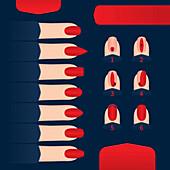 Nail shapes, illustration