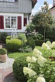 Vorgarten mit Buchskugeln, Hortensien, Herbstanemone und Storchschnabel