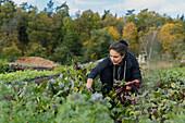 Female farmer working in vegetable garden