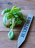 A bunch of basil on a wooden table