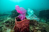 Barrel sponge and plastic