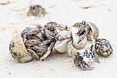 Hermit crab congregation on a beach