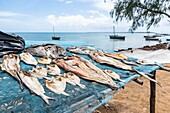 Fish drying in the sun