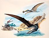Pterosaur flying reptiles, illustration