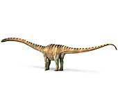 Mamenchisaurus, illustration