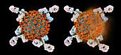 Antibodies responding to Covid-19 coronavirus, illustration