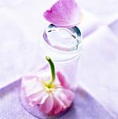 Blume unter einem Trinkglas