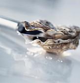 Eine Auster wird mit dem Austernmesser geöffnet