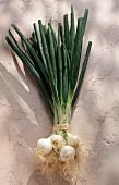 spring onions (topic: Lenôtre's garden)