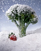 Broccoli in snow with strawberry