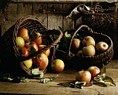 Frisch gepflückte Äpfel in zwei Körben