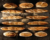 baguettes and loaves of country bread