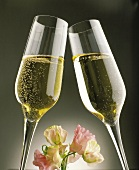 glasses of champagne and flower