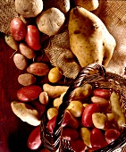 Selection of potatoes
