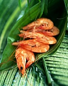 Crevetten auf grünen Blättern
