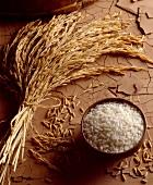 senegalese rice