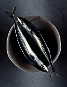 Two raw mackerels