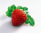 Eine Erdbeere und Erdbeerblätter