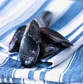 Mussels on tea towel