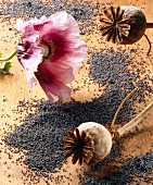 A poppy and seeds