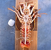 splayed spiny lobster