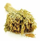 Sheaf of oats