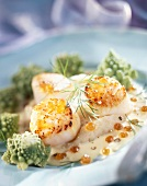 Scallops with celery purée
