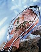 Rohe Goldbrasse mit Thymian im Fischgrillgitter