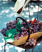 Basket of red grapes with secateurs and hat