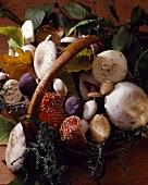 Basket of wild woodland mushrooms