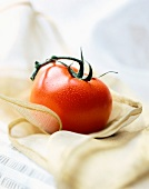 Red tomato and stalk