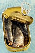 Opened can of sardines in oil