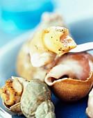 Whelks in shells