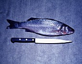 Fish and knife