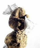 White alba truffles