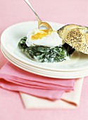Creamed spinach with poached egg