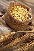 Weizenkörner im Jutesack, daneben Getreideähren