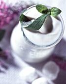 Pot of plain yoghurt