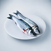 Pair of Branzino sea bass on plate
